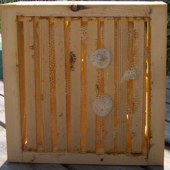 alberta_honey_harvest2.jpg (74667 bytes)