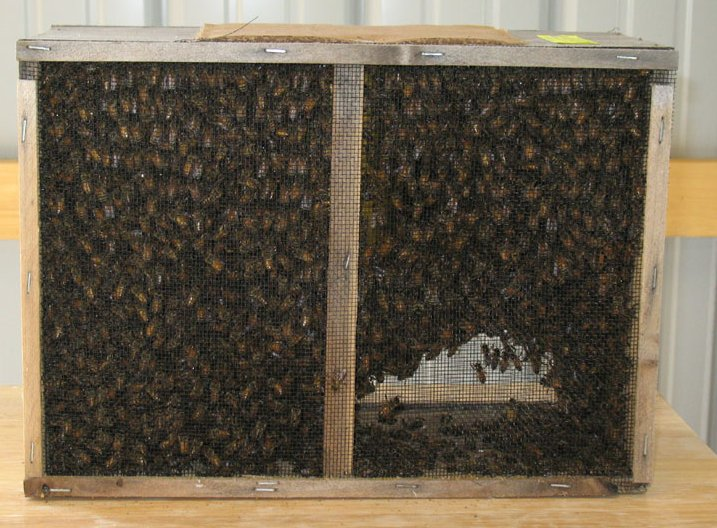 Beekeeping with the Warré hive -- Methods - photo#42