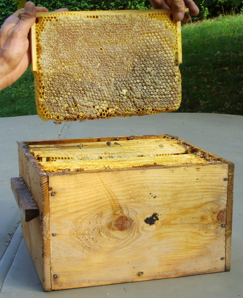 Beekeeping with the Warré hive -- Gilles Denis