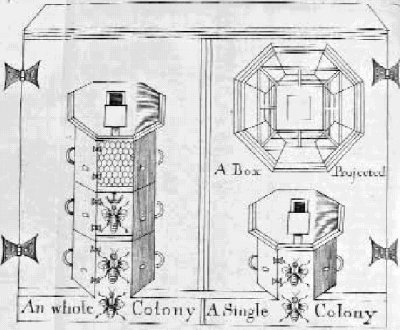Beekeeping with the warr hive hexagonal hive for Beehive plans blueprints