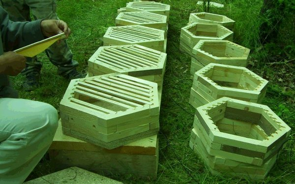 Beekeeping With The Warre Hive Hexagonal Hive